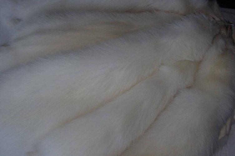 Racoon Blanco