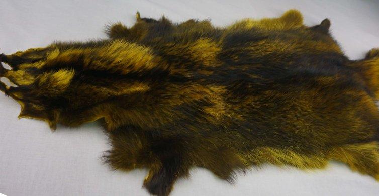 Racoon amarillo