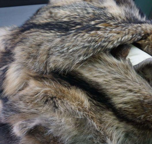 Racoon Marmota